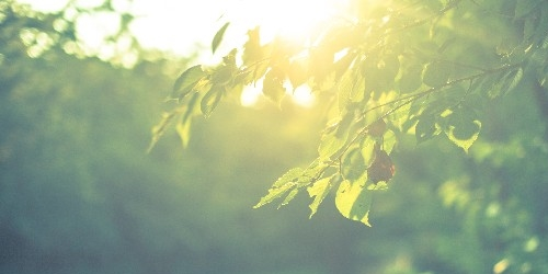 自然から学ぶ~自然は最も偉大なる教師~ part2