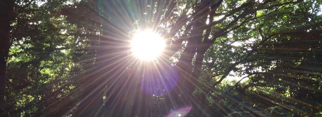光とは~人類の進化の方法~